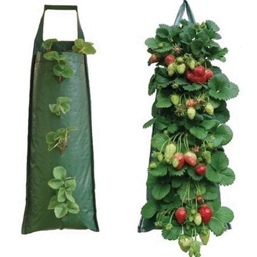 Ягоди могат да се отглеждат и в ... торби