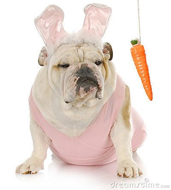 снимка: http://www.dreamstime.com/royalty-free-stock-photography-easter-dog-image18218967