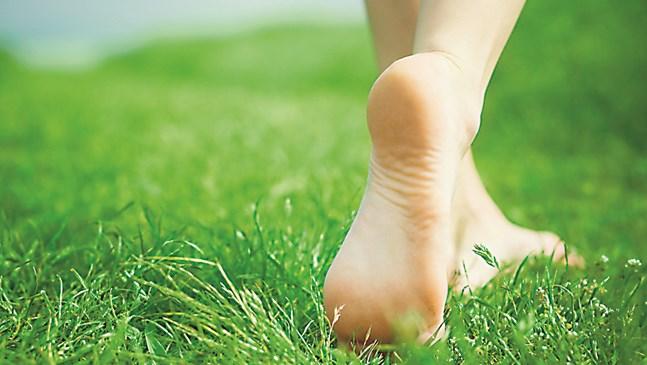 Кърлежите обичат висока трева, косете я