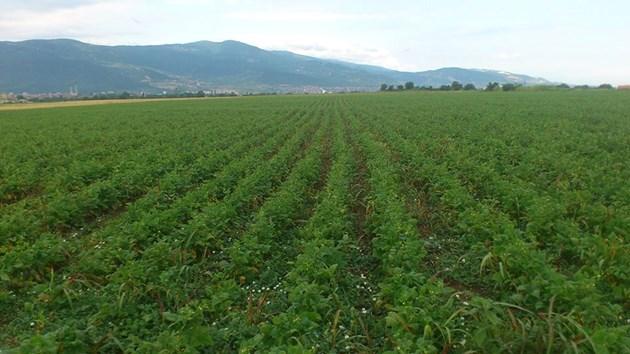 Фъстъците изискват топлина, влага и плодородна почва. Нужни са им 5-6 месеца с висока средна температура, интензивно слънчево греене и достатъчни валежи през вегетацията.