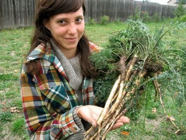 Така изглеждат корените на дивите моркови. Днес ги отглеждаме по-големи и в различни цветове.