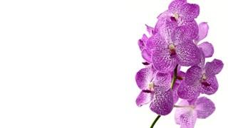 Кога да подхранваме и поливаме орхидеята