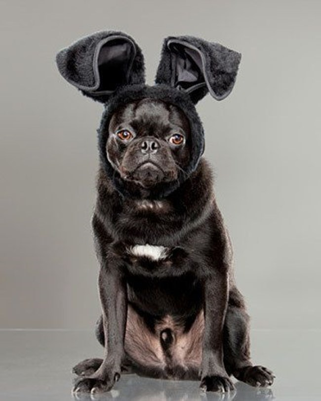 снимка: https://nz.lifestyle.yahoo.com/better-homes-gardens/pets/g/16422571/funny-pics-of-pets-dressed-as-the-easter-bunny/16422587/