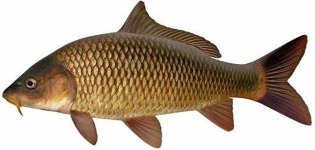Риболовни забрани през 2021 г.