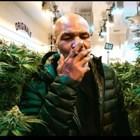 Тайсън загрява с марихуана
