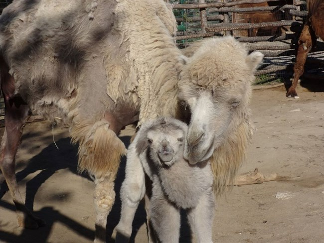 Снимки: Зоопарк Варна