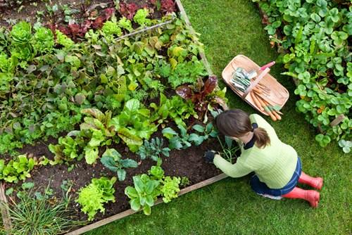 За начинаещи: В 4 стъпки - планирайте зеленчуци и плодове