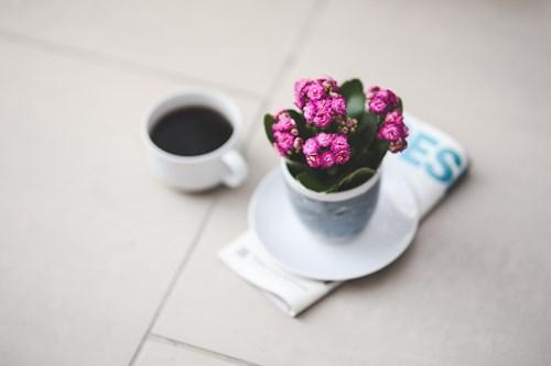 Здравословни ползи от растенията в дома