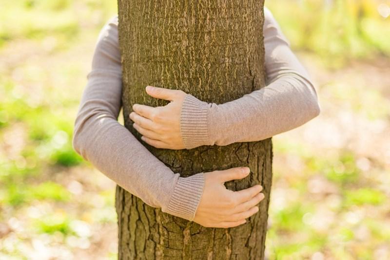 Дърветата излъчват положителни вибрации върху организма ни.