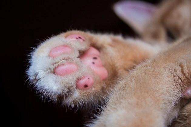 Няма доказателства за предаване на COVID-19 от животни на хора