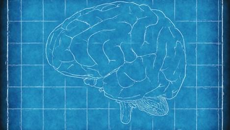 6 основни витамини и минерали за здрав мозък