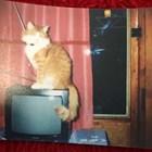 Мишо е най-старата котка у нас