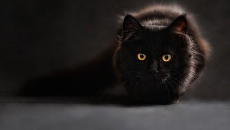 Мразите черни котки и не стъпвате върху шахти? Дали нямате ОКР?