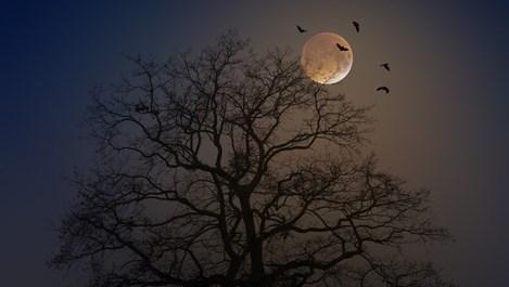 Луна в Овен – не правете резки движения