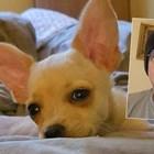 Жан-Клод Ван Дам спаси наше куче