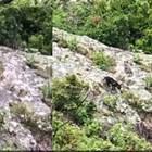 Черен вълк пази тракийско светилище