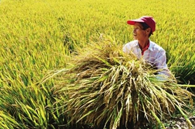 Китайският модел за избавяне от бедността помага на света