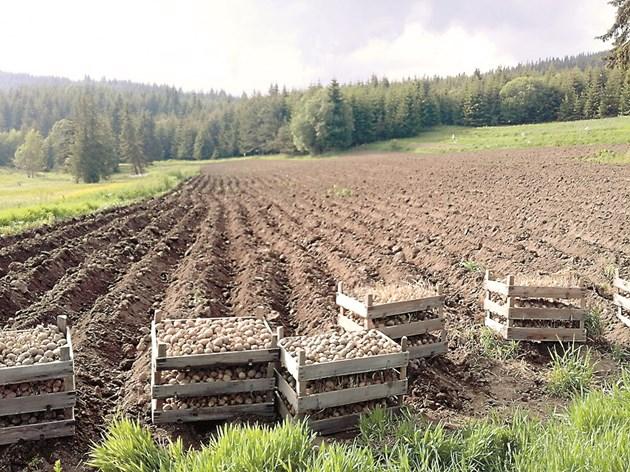 Картофите са едно от малкото възможности за земеделие в икономически най-уязвимите места - планинските райони