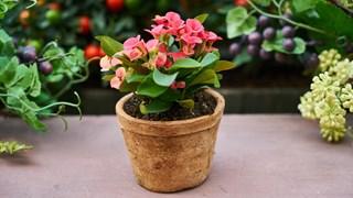 Какво трябва да свършим за стайните растения преди пролетта