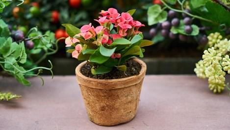 Направете това за стайните растения преди пролетта