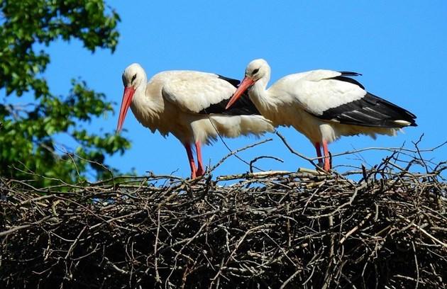 Променливото време подлъгва птиците