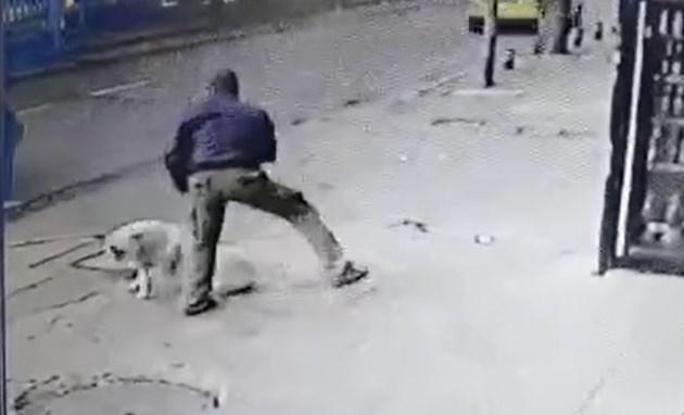 Мъж наръга куче (ВИДЕО 18+)