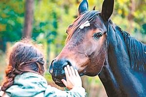 Общувайте с коня си – за него контактът му с вас е много важен и го успокоява