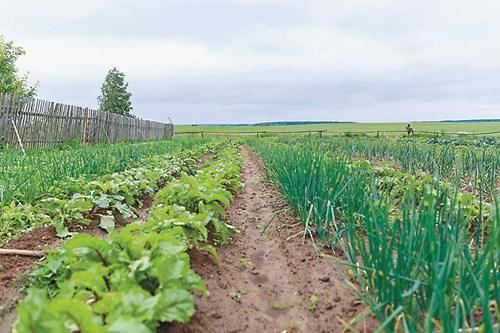 Редувайте зеленчуците в лехите