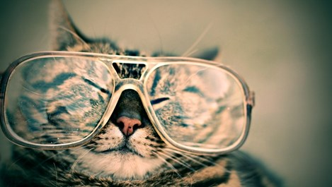 Наръчник за собственици на котки
