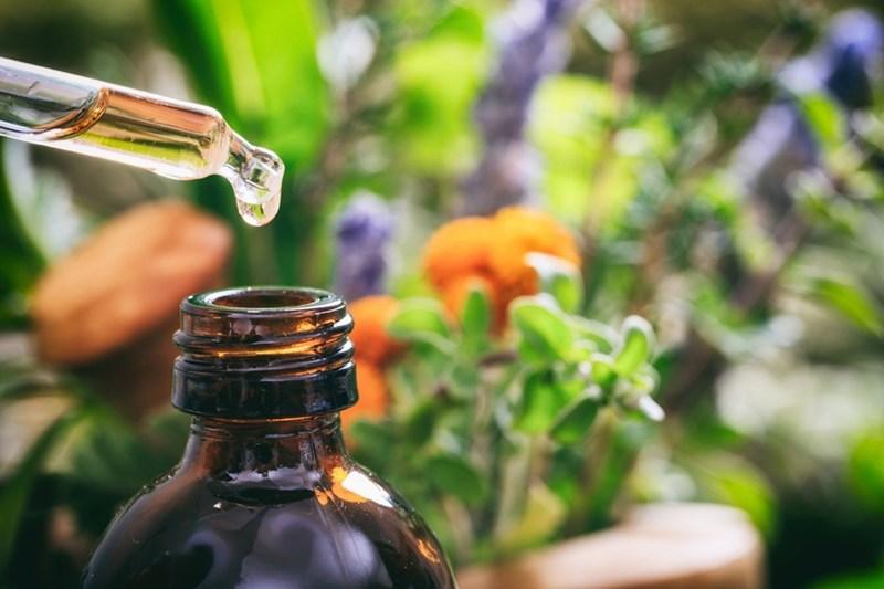 Етеричните масла пренасят дърветата и растенията у дома.