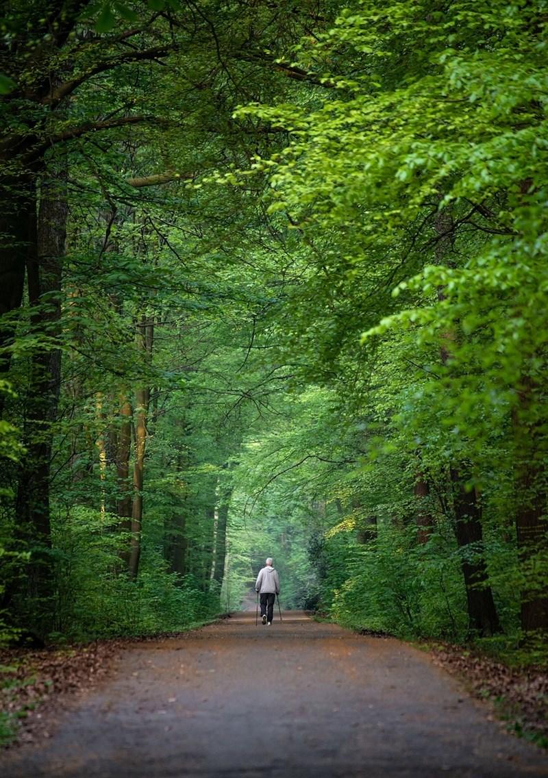 Разходката в гората зарежда със здраве и влияе благотворно на душата.СНИМКИ: ПИКСАБЕЙ