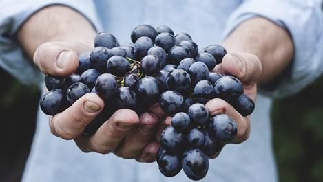 Надебелява ли се от плодовете?