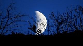 Какво ни носи Луната в Овен