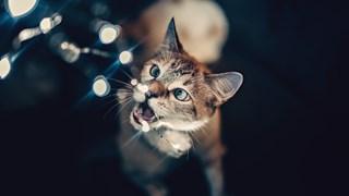 Храни, които не бива да даваме на котката