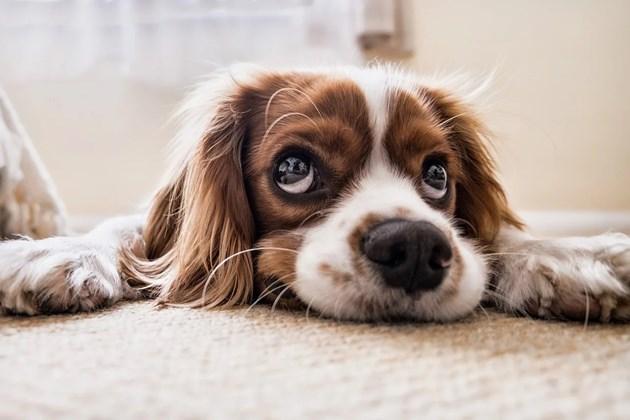 И кучетата имат интелект, но той зависи от породата
