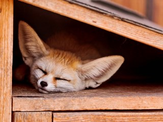 Страничните ефекти на съня в повече