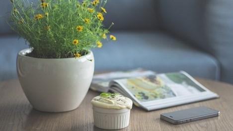 Опасните стайни растения