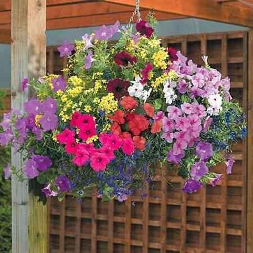 Как да засадите висящо цвете като истински професионалисти