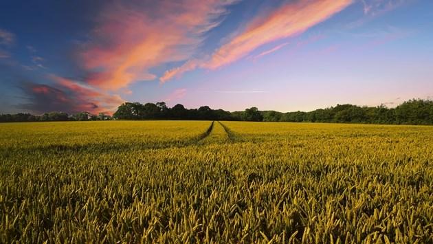 Приемат заявленията за отстъпва от акциза върху газьола в селското стопанство