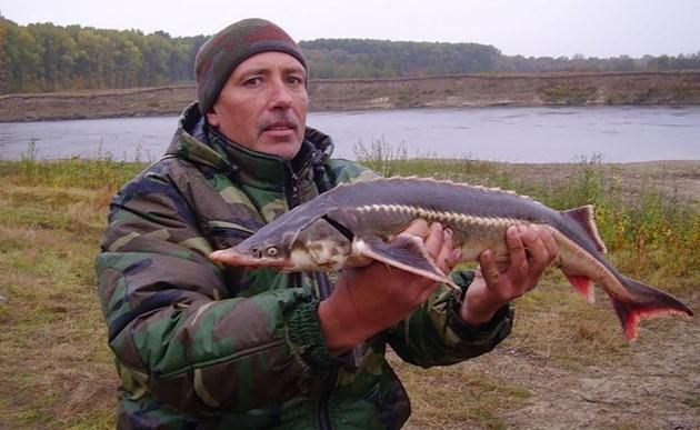 Връщат чигата в Дунав
