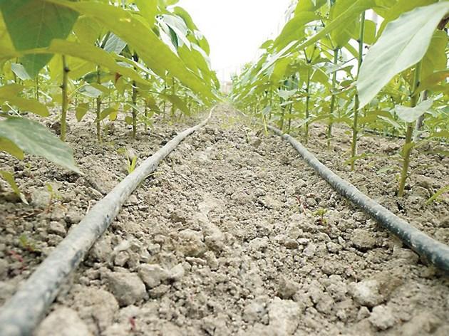Ако цените на водата се покачват, скъпото капково напояване днес може да се окаже икономически изгодна инвестиция за утрешния ден