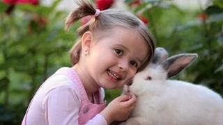 Заекът - различният домашен любимец