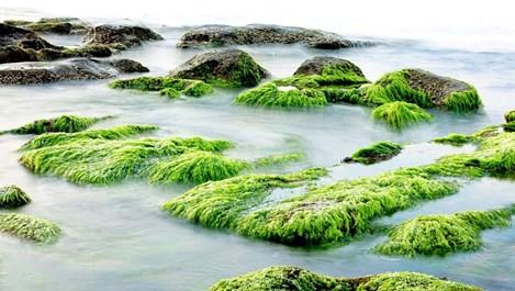 Маски с водорасли за суперкожа