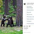 """Вижте уникални кадри на мечета, които """"танцуват в кръг"""" в гората (Снимки)"""