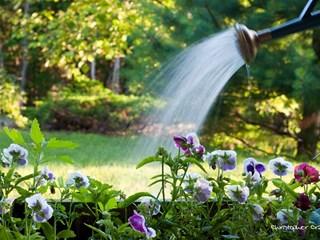 Градината през лятото - поливате рационално, пестите повече