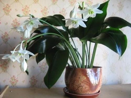 Растенията тонизират и прогонват стреса