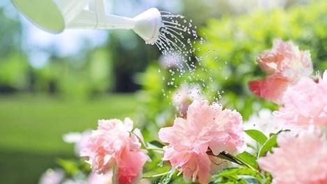 Как да омекотим водата за поливане