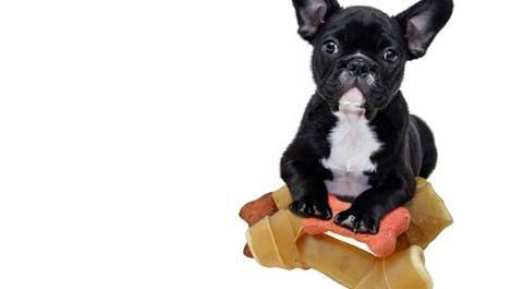 Най-опасните храни за кучето