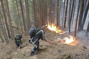 Горски служители подготовят на почвата за залесяване на част от изгорелите при пожара в Кресненското дефиле гори. Снимка: Архив