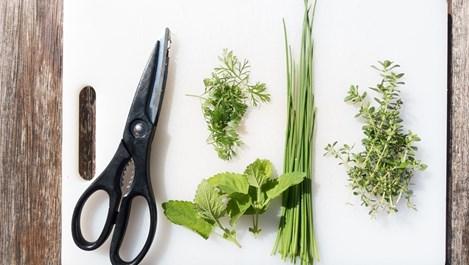 4 билки, които засилват имунитета преди зимата